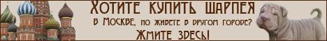 Шарпей Москва, шарпей Украина, шарпей Санкт-Петербург. Наши шарпеи живут везде!
