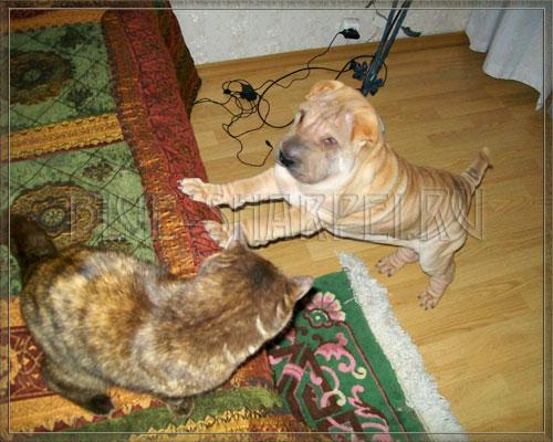 щенок знакомится с котом